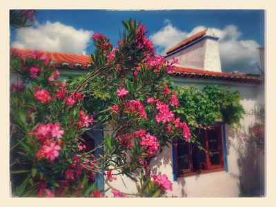 Photo for Holiday home in Alentejo