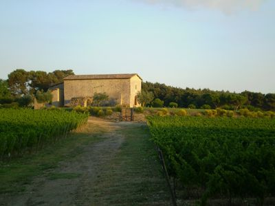 Vineyards and Sant' Antimo