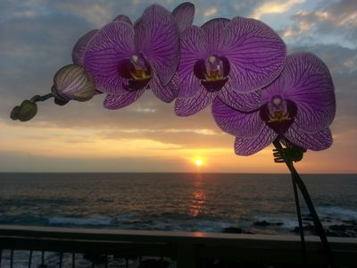 Photo for Gorgeous Oceanfront Mermaid Manor minutes from downtown Kona- Excellent Rates!