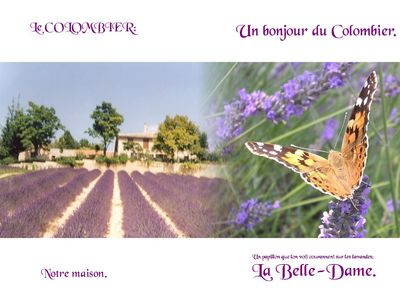 Photo for PLATEAU DE VALENSOLE Cottage on the farm on exploitation of plants with perfumes.