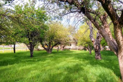 Wander through the adjacent apple orchard on sunny days.
