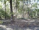 1BR Campground Vacation Rental in Ore city, Texas