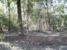 Photo for 1BR Campground Vacation Rental in Ore city, Texas