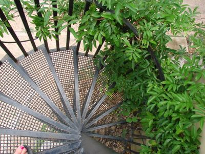 CIRCULAR STAIRS TO UNIT