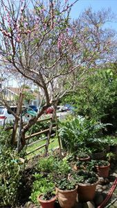 Safe Street Parking  in Front of House w Edible Landscape & Butterfly Gardens