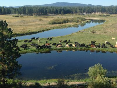 View of cattle around pond. Spring 2015