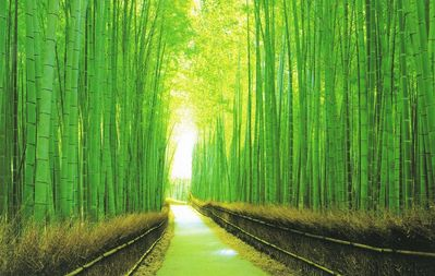 Photo for Private Apartment in Bamboo Forest