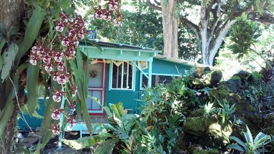 Tucked under enormous trees this cozy cabin is charming, magical and memorable.