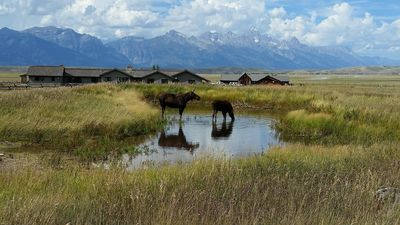 Long Term Rent National Elk Refuge In-Holding 4 miles from Town of Jackson Hole