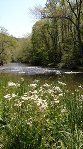 Wild flowers along the  river bank