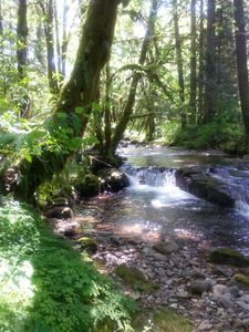 Paths lead you to Marten Creek, bordering west side of property