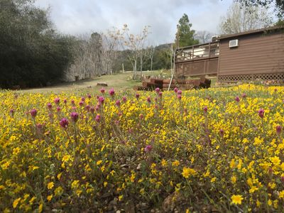 Super bloom on the property