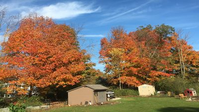 Fall beauty in our yard!