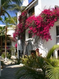 Bougainvillea in full  summer bloom surrounds the complex