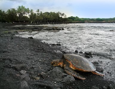 Photo for Turtle Paradise at Punalu'u Black Sand Beach
