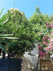 Photo for Juan les pins, Golfe Juan, 5 minutes walk to the beach, with garden.