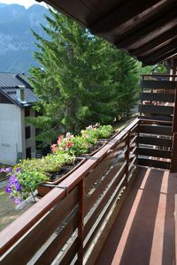 Photo for Red Sasso apartment overlooking the Alps
