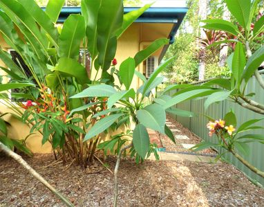 Photo for Cairns Rainforest Cottage *Tropic Hideaway Pets OK* 10mins to City, Free WiFi.