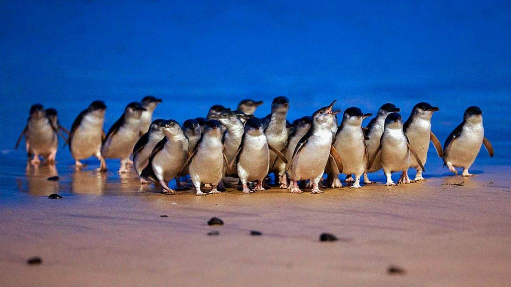 Fox & Penguins - Luxury townhouse with FREE wi-fi!