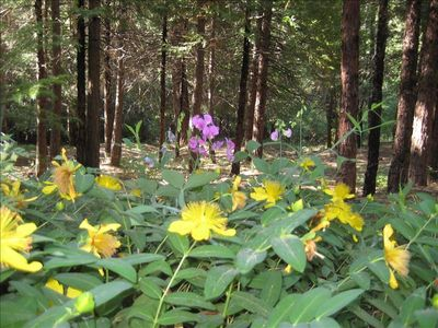 Fresh Pine Air in the Middle of 5 Tree-Filled Acres - All usable and walkable