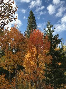 Photo for Best Fall Leaves In Decades!  Great Fall Rates! Close to Ouray & San Juans