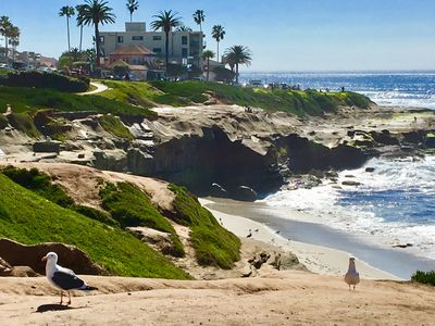 Photo for La Jolla Cove Oceanfront Paradise with Private Patio