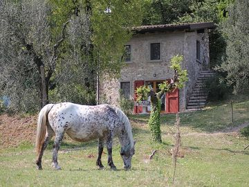 Pisaloc - incredible lake views surrounded by olive trees - Stone cottage Ca' Brusada