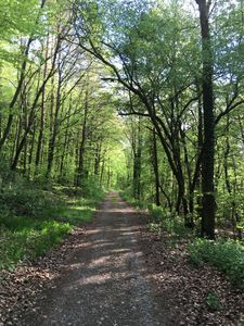 Nature trails directly next to property for hiking, jogging, biking, horseback.