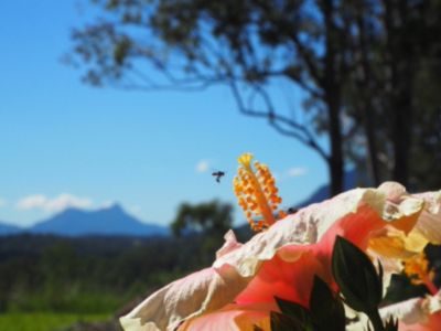 Photo for Eco cabin (solar powered, rain watered), Great views Mt Warning, Very private
