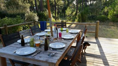 dinner with views over the forest
