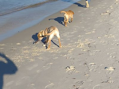 Photo for Pet Friendly Cottage-3 blocks from Beach