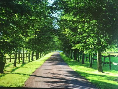The property entrance. Horses fields on each site. Entrance road is 800 meters