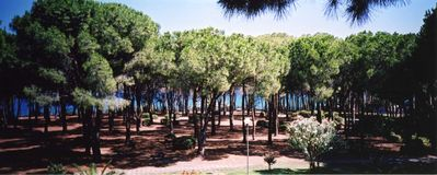 Photo for Sardinia S Margherita Pula rent house in pine forest on the sea 3 beds