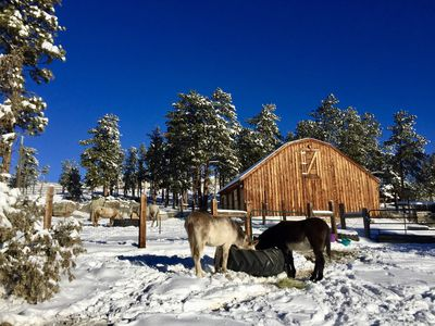 Photo for Private Forested Foothills Horse Property Bordering National Forest