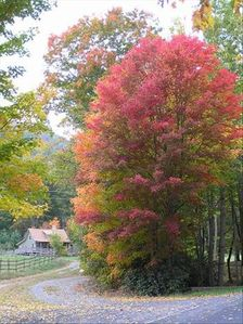 Flaming fall color peaks in mid-October & is a sight to behold!