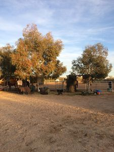 Photo for TEAM ROPING IN WICKENBURG