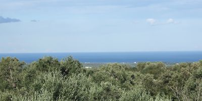 Roof Terrace view  Adriatic Sea over Olive trees