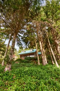 Photo for NEW LISTING!! Private Home in the Trees within walking distance to the Bay!