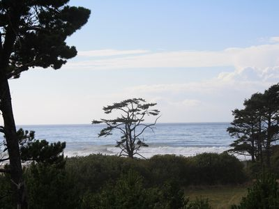Photo for Ocean View - Easy Beach Access - Quiet Nestled in Trees - Bird Paradise!
