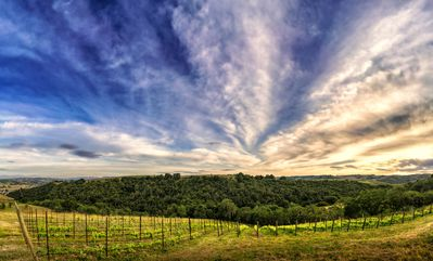 Copia vineyard view in Paso Robles wine country