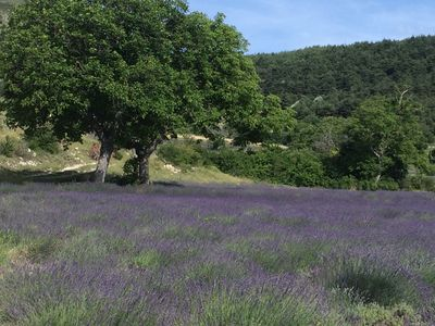 Photo for The Country Lavender in the Hamlet of Pelleret 800 meters.