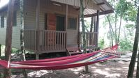 Home away in the jungle canopy