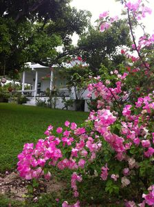 Whale's Tale Cottage- Tropical Island Charm on Man-O-War Cay With Beach Access
