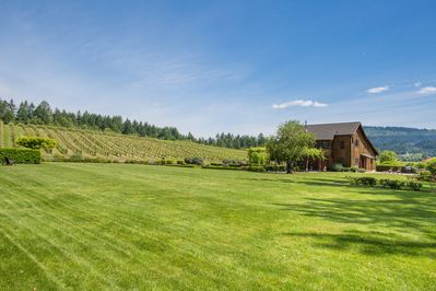 Sprawling lawn and vineyard view from the home