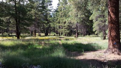 Your back yard is the National Forest