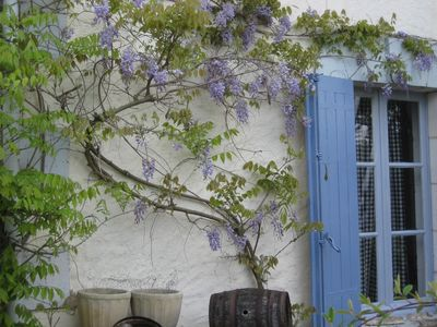 House front with pretty wisteria, has fig tree, roses & large old grape press
