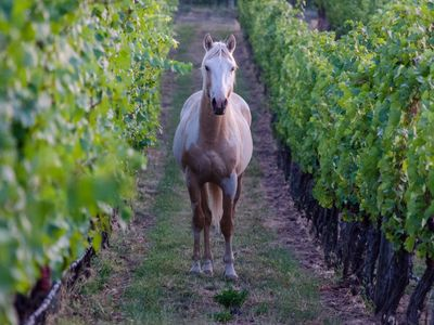 Stay on a vineyard, walk to wineries, stunning views of the Okanagan Valley!
