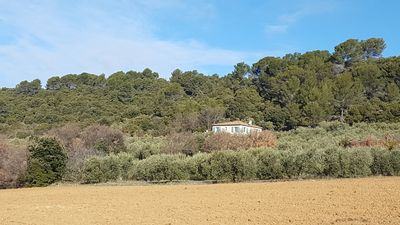 Photo for Charming Villa in the middle of Olives