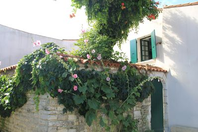 Ancient stone wall and old pear tree invaded by a Bignonia
