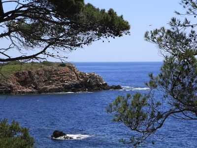 Photo for Bandol: Small paradise by the sea